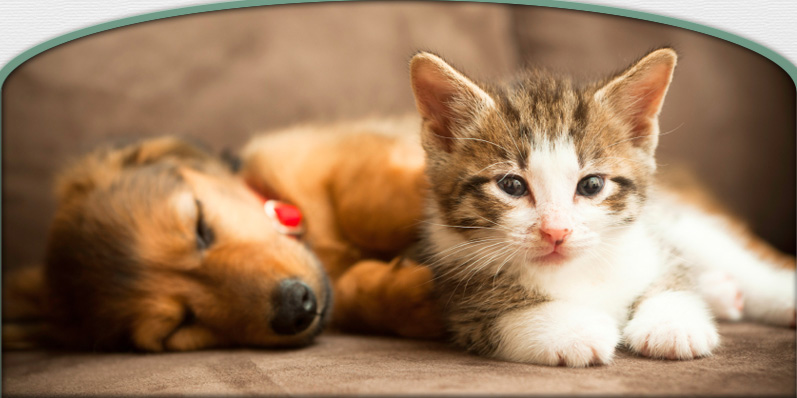 Veterinary Care in Barrington, IL